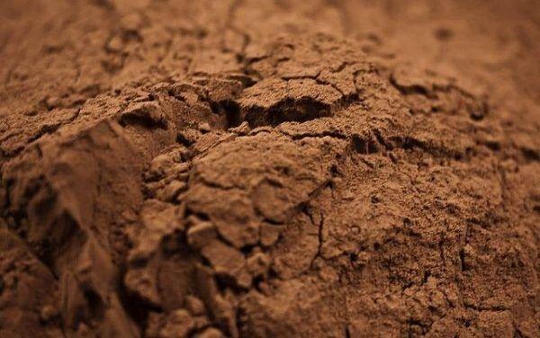 Gorzka czekolada i kakao – bogactwo polifenoli